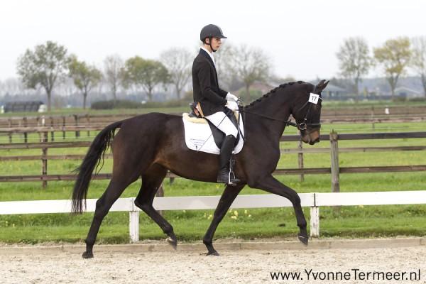 Mijn eigen paard Fiwemmie (Apache x Rhoddium) slaagde vandaag ook voor de IBOP en is nu elite!